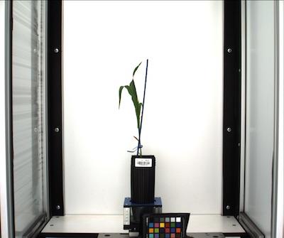 Correct Color - PlantCV