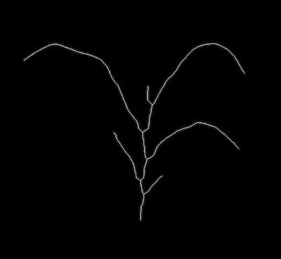 Skeletonize - PlantCV