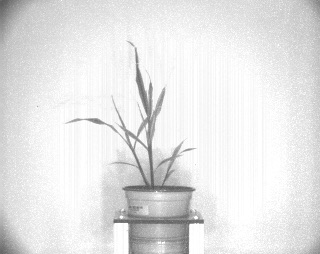Sobel Filter - PlantCV